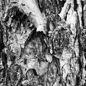 Abstract Black & White Photo Wall Art Tree Bark  2